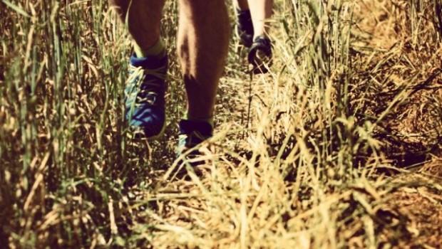 Biegający w zbożu